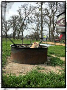 cat_in_firepit-