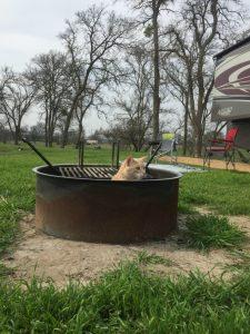 cat_in_firepit
