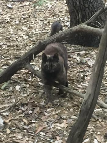 Cat in Woods
