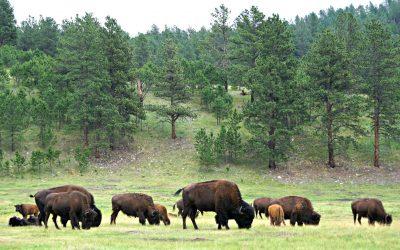 Custer and the Little Bighorn Battlefield, A Lifelong Dream – Part I